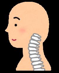 頚椎断面イラスト